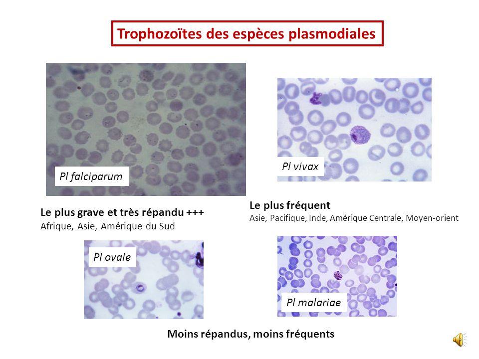 Pl ovale Pl malariae Pl vivax Pl falciparum Le plus grave et très répandu +++ Afrique, Asie, Amérique du Sud Le plus fréquent Asie, Pacifique, Inde, Amérique Centrale, Moyen-orient Moins répandus, moins fréquents Trophozoïtes des espèces plasmodiales
