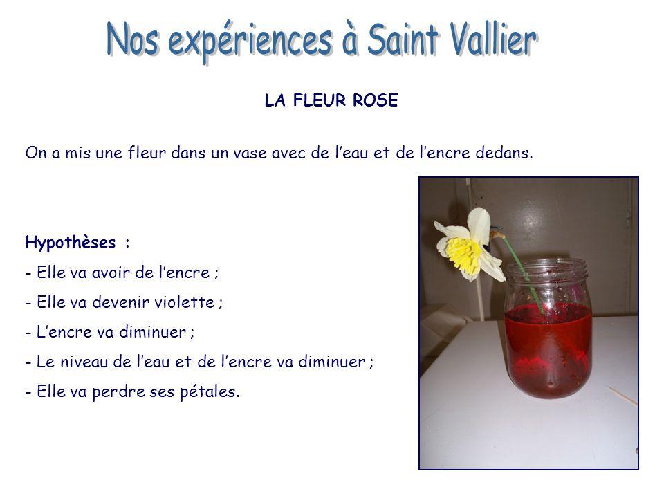 LA FLEUR ROSE On a mis une fleur dans un vase avec de l'eau et de l'encre dedans. Hypothèses : - Elle va avoir de l'encre ; - Elle va devenir violette