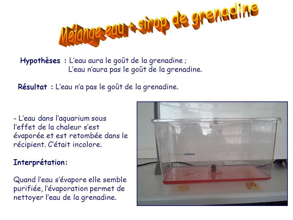 Hypothèses : L'eau aura le goût de la grenadine ; L'eau n'aura pas le goût de la grenadine. Résultat : L'eau n'a pas le goût de la grenadine. - L'eau