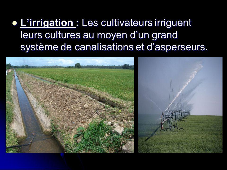  L'irrigation : Les cultivateurs irriguent leurs cultures au moyen d'un grand système de canalisations et d'asperseurs.