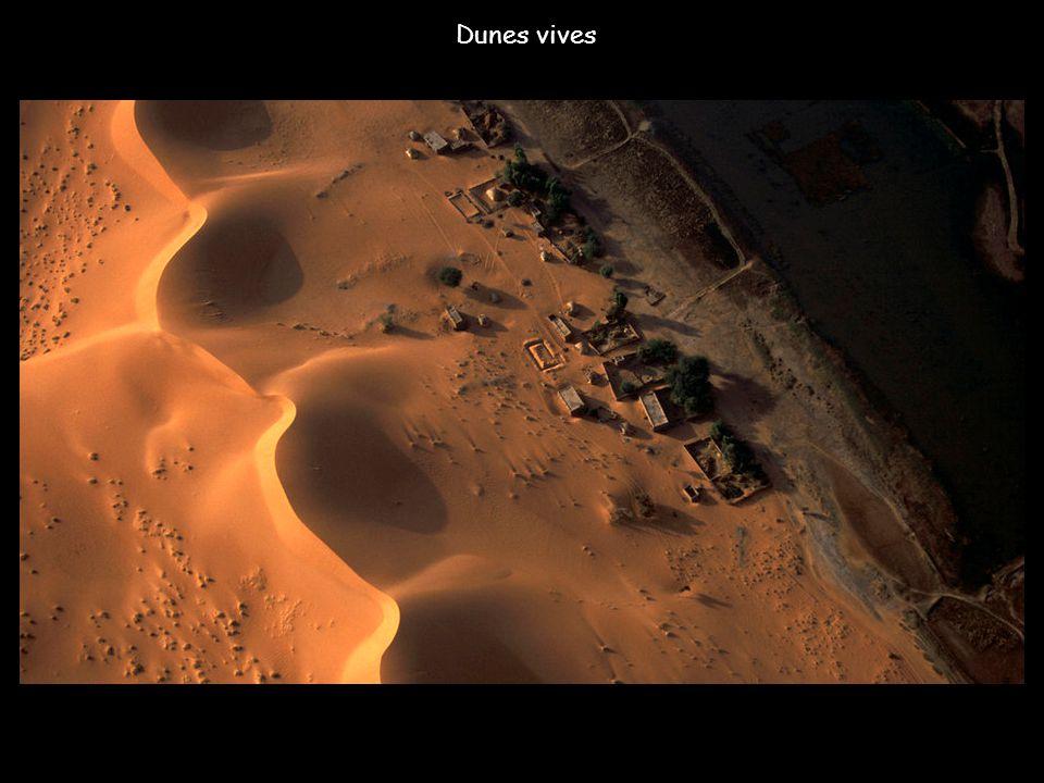 Dunes fixées