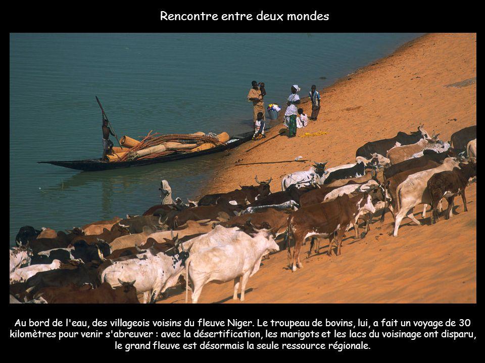 Depuis son sommet, la vallée du Niger en pleine saison sèche. La profondeur des bras du fleuve n'excède pas le mètre. En hiver, les eaux peuvent attei