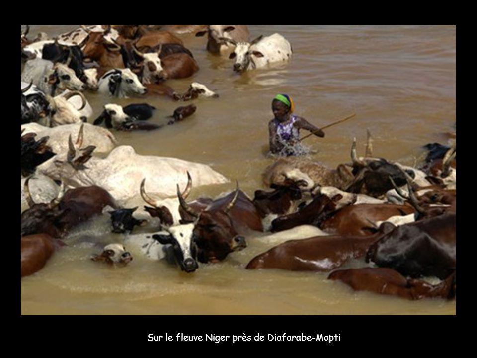 Au bord de l'eau, des villageois voisins du fleuve Niger. Le troupeau de bovins, lui, a fait un voyage de 30 kilomètres pour venir s'abreuver : avec l