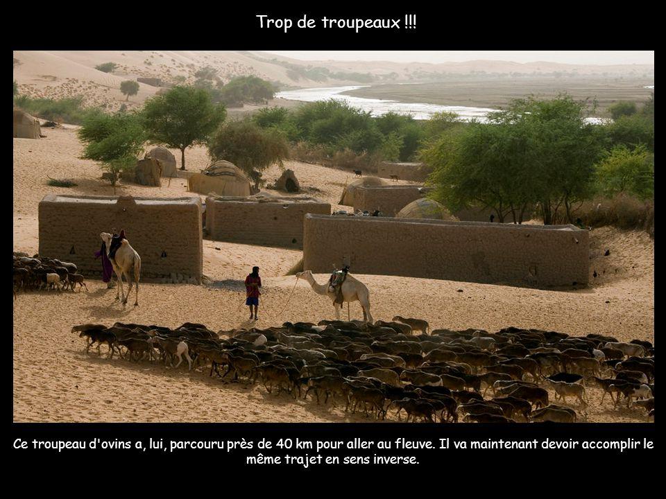 Sur le chemin du pays dogon, des nomades touaregs venus des mines de sel de Touadenni, à 750 kilomètres au nord, se reposent sur une plage avec leurs
