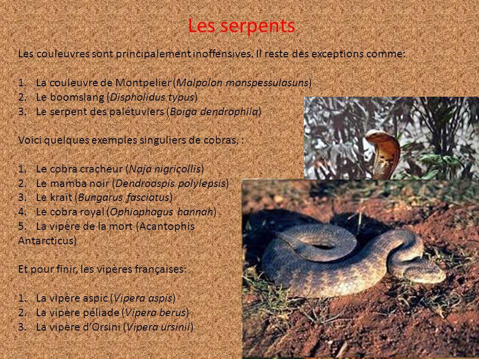 Les couleuvres sont principalement inoffensives. Il reste des exceptions comme: 1.La couleuvre de Montpelier (Malpolon monspessulasuns) 2.Le boomslang