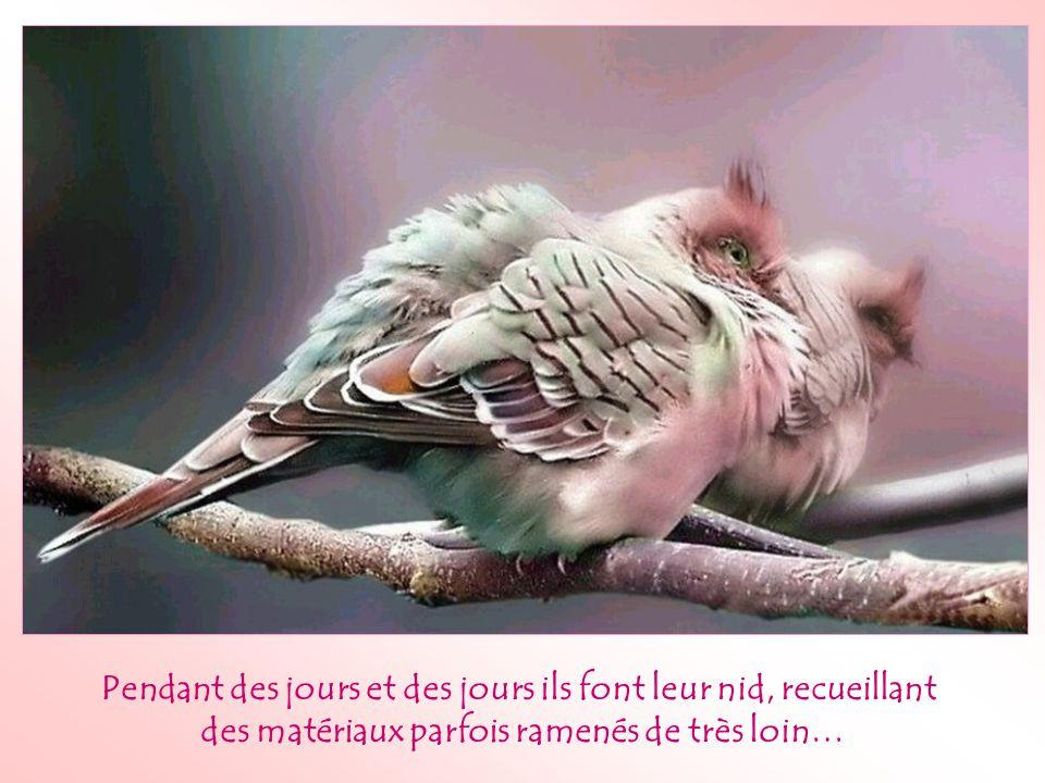 As-tu déjà observé l'attitude des oiseaux face à l'adversité?