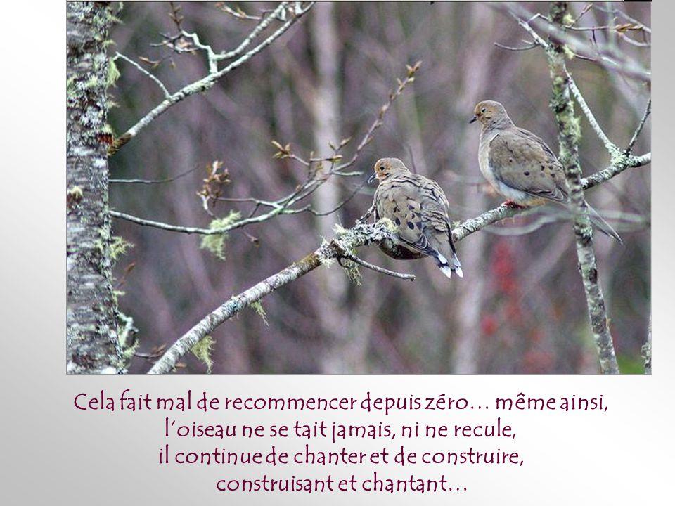Parfois –très souvent – avant que naissent les oisillons, un animal, un enfant, une tempête détruit une fois de plus le nid, mais cette fois avec son