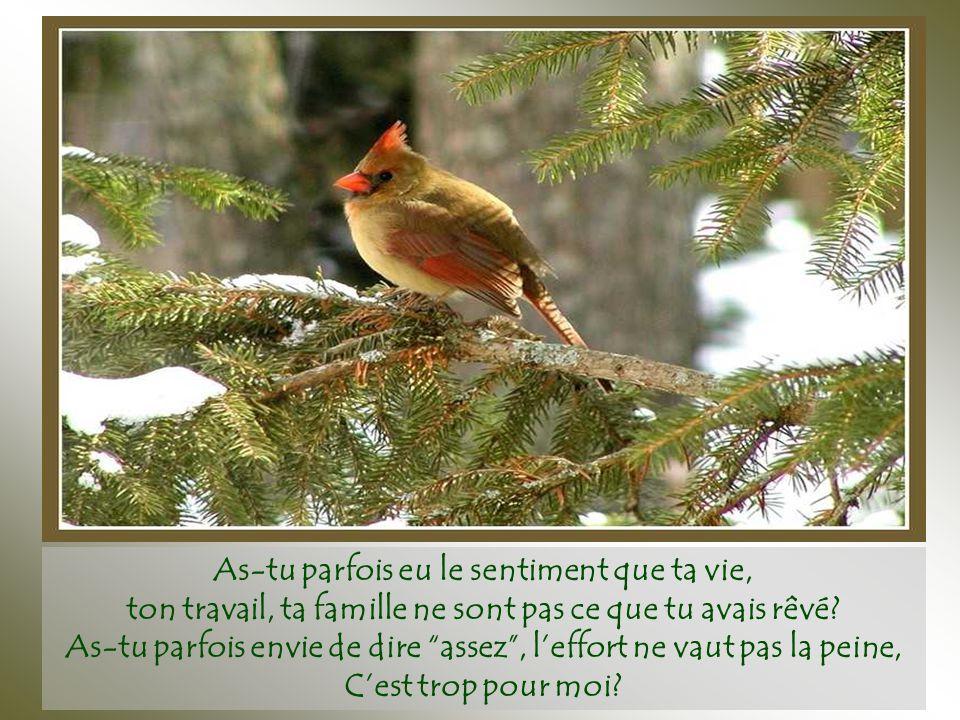 Cela fait mal de recommencer depuis zéro… même ainsi, l'oiseau ne se tait jamais, ni ne recule, il continue de chanter et de construire, construisant