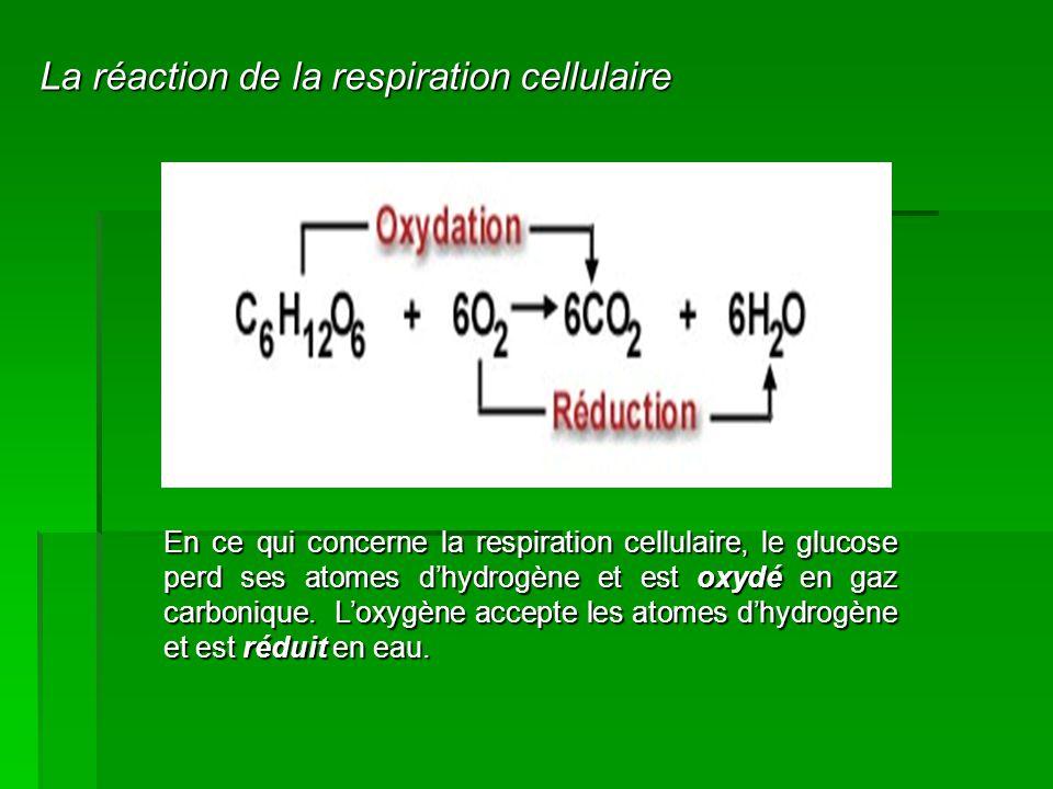 En ce qui concerne la respiration cellulaire, le glucose perd ses atomes d'hydrogène et est oxydé en gaz carbonique. L'oxygène accepte les atomes d'hy