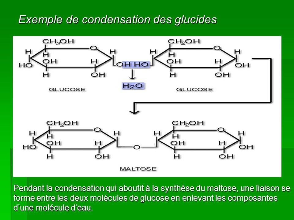 Exemple de condensation des glucides Pendant la condensation qui aboutit à la synthèse du maltose, une liaison se forme entre les deux molécules de gl