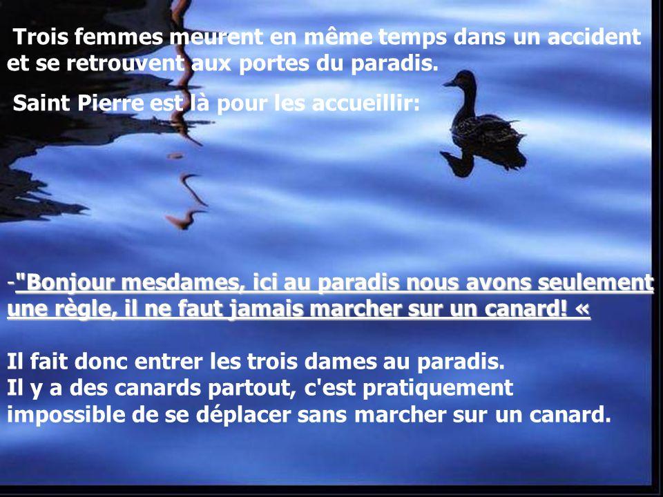 Diaporamas-a-la-con.com Diaporama PPS réalisé pour http://www.diapora mas-a-la-con.com Ne marchez pas sur les canards Cliquez pour faire défiler.