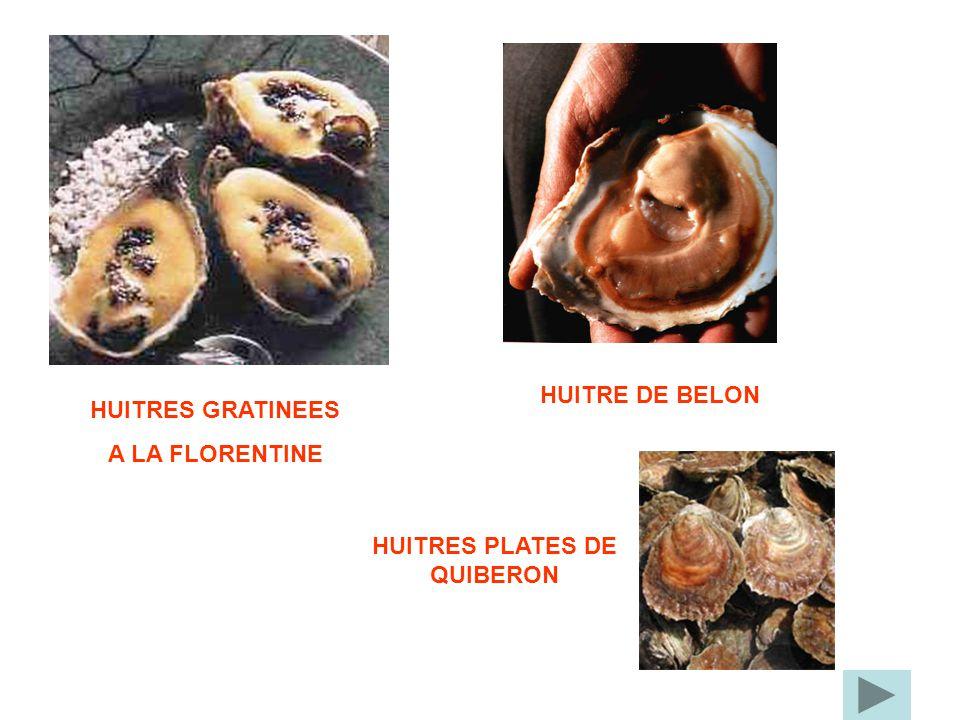 HUITRES GRATINEES A LA FLORENTINE HUITRE DE BELON HUITRES PLATES DE QUIBERON