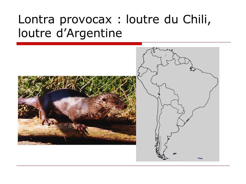 Lontra provocax : loutre du Chili, loutre d'Argentine