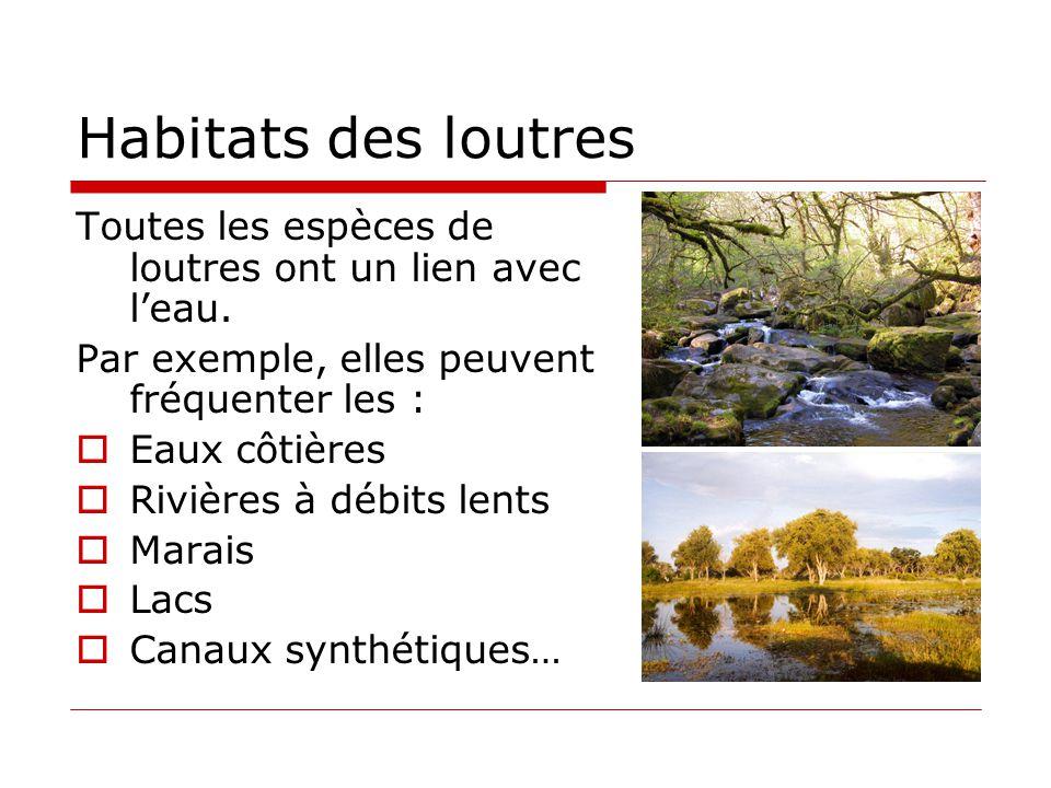 Habitats des loutres Toutes les espèces de loutres ont un lien avec l'eau. Par exemple, elles peuvent fréquenter les :  Eaux côtières  Rivières à dé