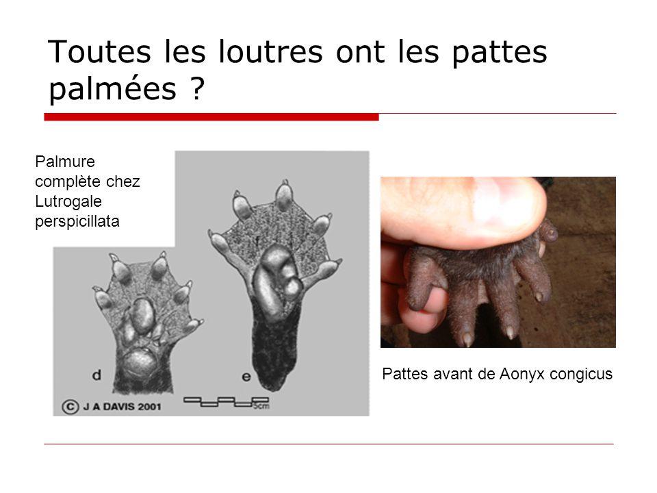 Toutes les loutres ont les pattes palmées ? Pattes avant de Aonyx congicus Palmure complète chez Lutrogale perspicillata