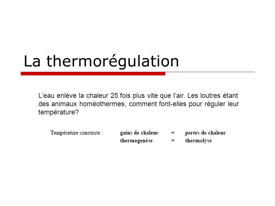 La thermorégulation L'eau enlève la chaleur 25 fois plus vite que l'air. Les loutres étant des animaux homéothermes, comment font-elles pour réguler l