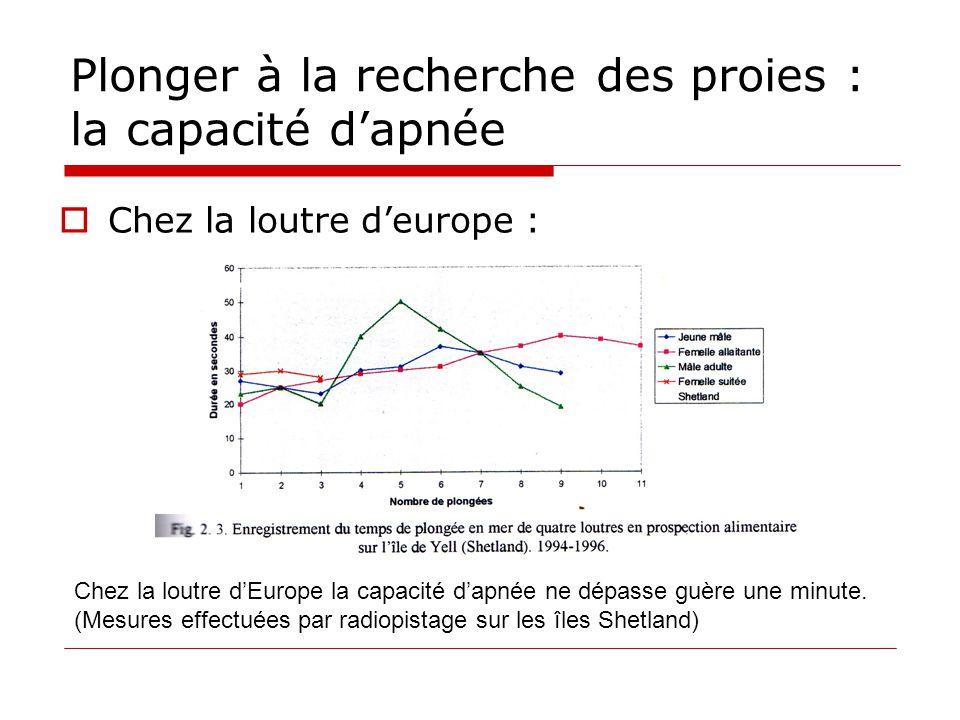 Plonger à la recherche des proies : la capacité d'apnée  Chez la loutre d'europe : Chez la loutre d'Europe la capacité d'apnée ne dépasse guère une m