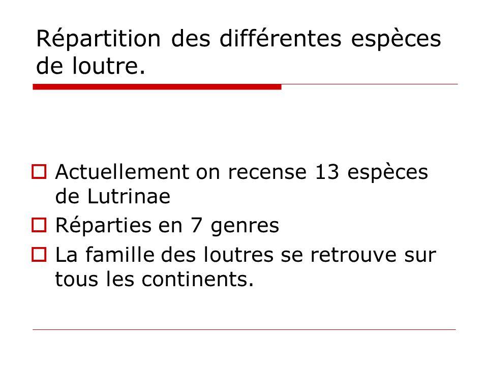 Répartition des différentes espèces de loutre.  Actuellement on recense 13 espèces de Lutrinae  Réparties en 7 genres  La famille des loutres se re