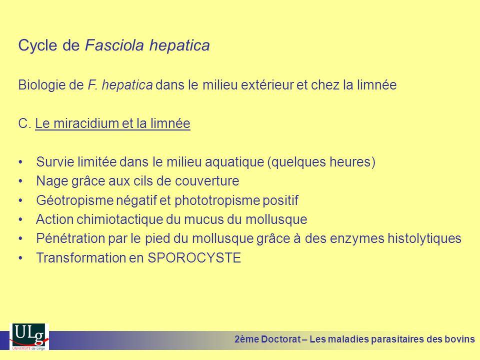 Cycle de Fasciola hepatica Biologie de F. hepatica dans le milieu extérieur et chez la limnée C. Le miracidium et la limnée •Survie limitée dans le mi