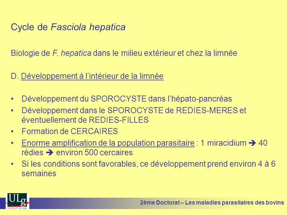 Cycle de Fasciola hepatica Biologie de F. hepatica dans le milieu extérieur et chez la limnée D. Développement à l'intérieur de la limnée •Développeme