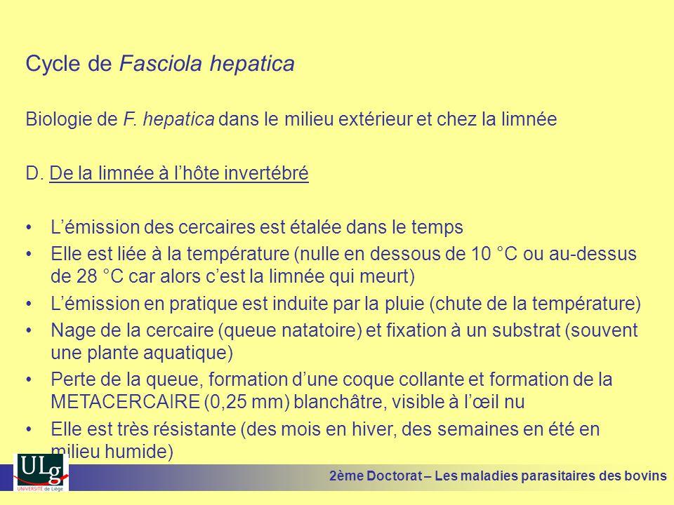 Cycle de Fasciola hepatica Biologie de F. hepatica dans le milieu extérieur et chez la limnée D. De la limnée à l'hôte invertébré •L'émission des cerc