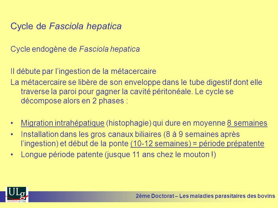 Cycle de Fasciola hepatica Cycle endogène de Fasciola hepatica Il débute par l'ingestion de la métacercaire La métacercaire se libère de son enveloppe