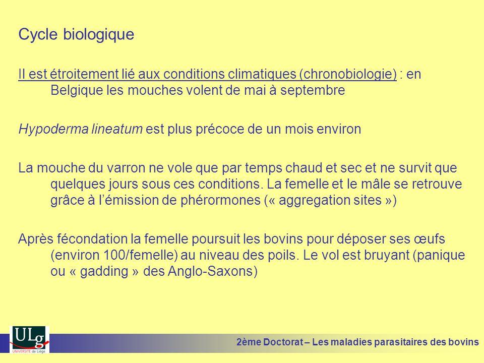 Cycle biologique Il est étroitement lié aux conditions climatiques (chronobiologie) : en Belgique les mouches volent de mai à septembre Hypoderma line