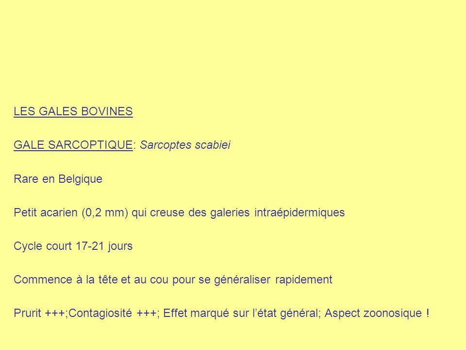 LES GALES BOVINES GALE SARCOPTIQUE: Sarcoptes scabiei Rare en Belgique Petit acarien (0,2 mm) qui creuse des galeries intraépidermiques Cycle court 17