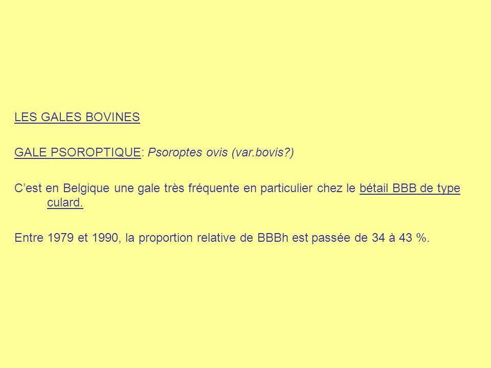 LES GALES BOVINES GALE PSOROPTIQUE: Psoroptes ovis (var.bovis?) C'est en Belgique une gale très fréquente en particulier chez le bétail BBB de type cu