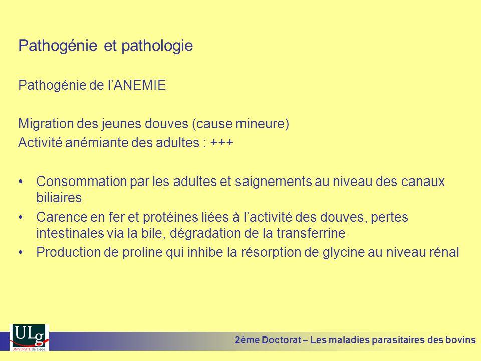 Pathogénie et pathologie Pathogénie de l'ANEMIE Migration des jeunes douves (cause mineure) Activité anémiante des adultes : +++ •Consommation par les