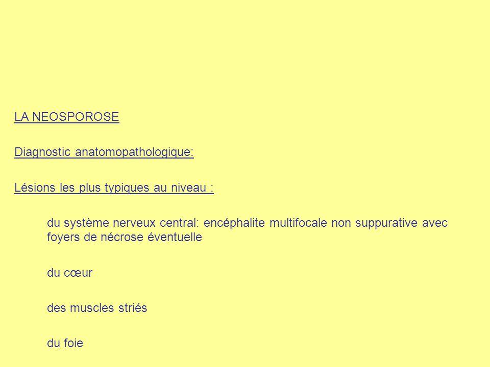 LA NEOSPOROSE Diagnostic anatomopathologique: Lésions les plus typiques au niveau : du système nerveux central: encéphalite multifocale non suppurativ
