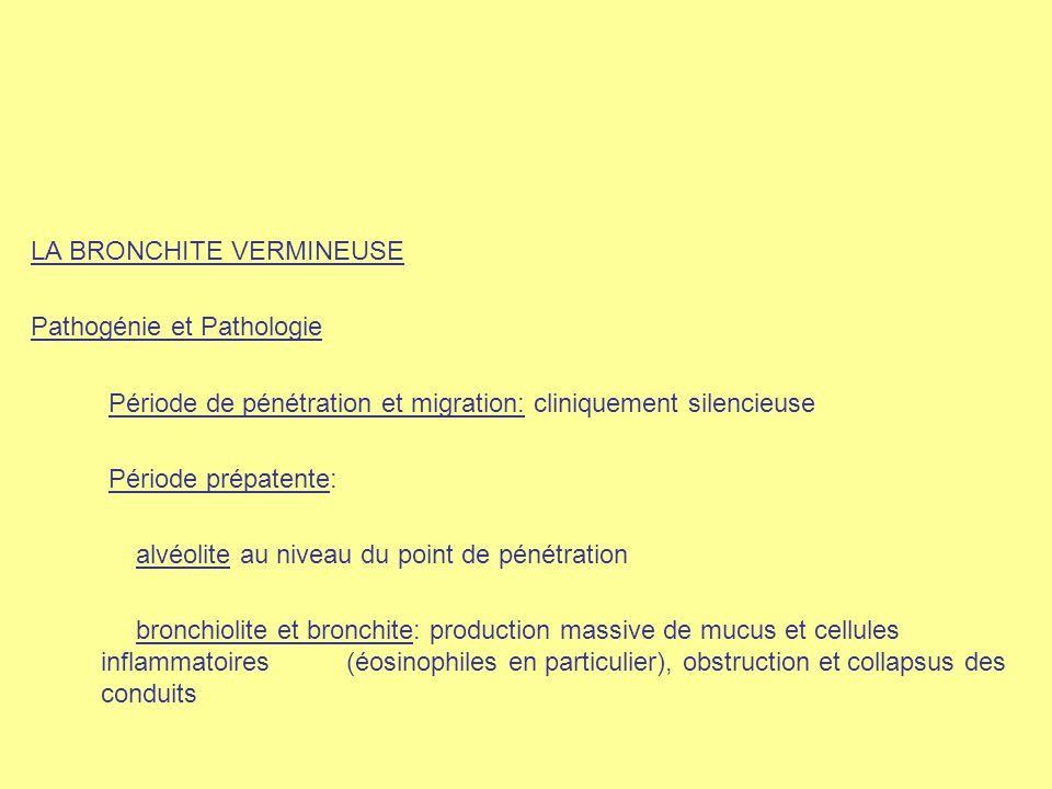LA BRONCHITE VERMINEUSE Pathogénie et Pathologie Période de pénétration et migration: cliniquement silencieuse Période prépatente: alvéolite au niveau