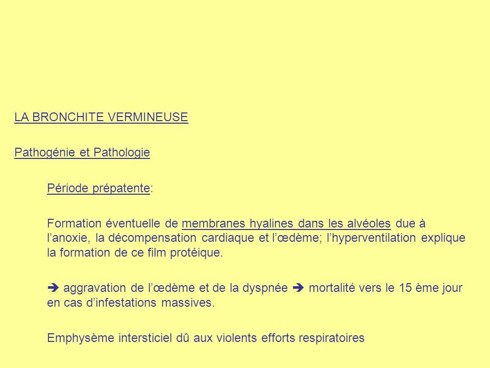 LA BRONCHITE VERMINEUSE Pathogénie et Pathologie Période prépatente: Formation éventuelle de membranes hyalines dans les alvéoles due à l'anoxie, la d