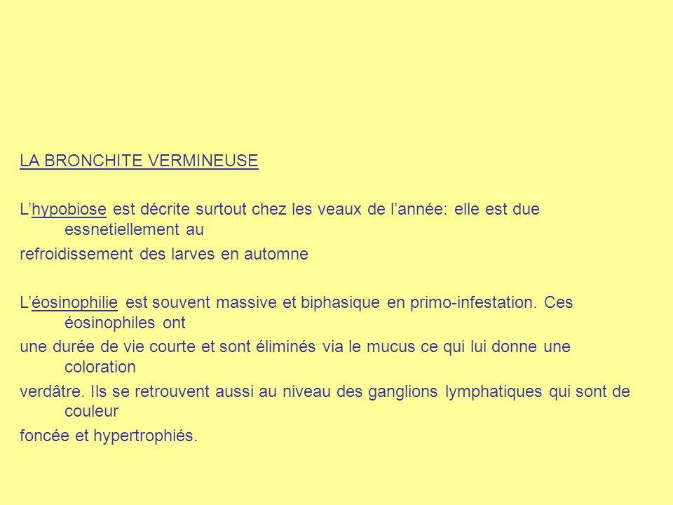 LA BRONCHITE VERMINEUSE L'hypobiose est décrite surtout chez les veaux de l'année: elle est due essnetiellement au refroidissement des larves en autom