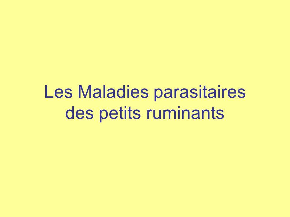 Les Maladies parasitaires des petits ruminants
