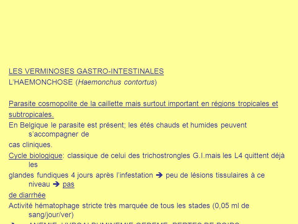 LES VERMINOSES GASTRO-INTESTINALES L'HAEMONCHOSE (Haemonchus contortus) Parasite cosmopolite de la caillette mais surtout important en régions tropica