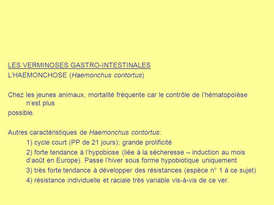 LES VERMINOSES GASTRO-INTESTINALES L'HAEMONCHOSE (Haemonchus contortus) Chez les jeunes animaux, mortalité fréquente car le contrôle de l'hématopoïèse