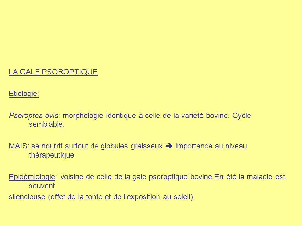 LA GALE PSOROPTIQUE Etiologie: Psoroptes ovis: morphologie identique à celle de la variété bovine. Cycle semblable. MAIS: se nourrit surtout de globul