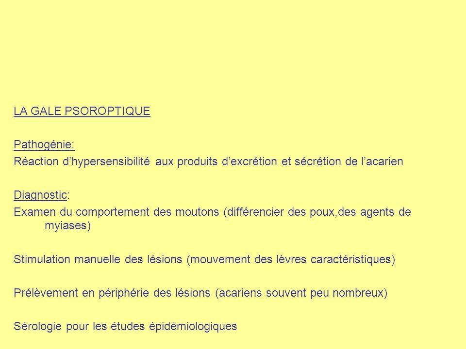 LA GALE PSOROPTIQUE Pathogénie: Réaction d'hypersensibilité aux produits d'excrétion et sécrétion de l'acarien Diagnostic: Examen du comportement des
