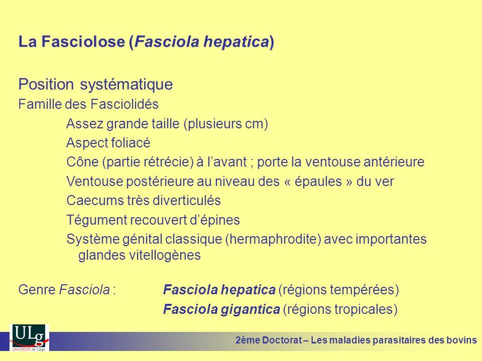 Pathogénie et pathologie Liée aux deux phases du cycle endogène MIGRATION INTRA-HEPATIQUE •Péritonite éventuelle lors d'infestations massives •Au niveau du foie, forte destruction tissulaire par histophagie •Trajets remplis de sang puis de tissus nécrosés et enfin de tissus fibreux •HEPATITE HEMORRAGIQUE et NECROSANTE accompagnée éventuellement d'ANEMIE (bien supportée chez les bovins, souvent mortelle chez les ovins) •Augmentation marquée de certaines enzymes hépatiques (LDH, GGT…) 2ème Doctorat – Les maladies parasitaires des bovins