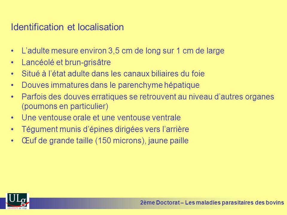 MoléculeDose en mg/kg Nombre d'administrations % activité immatures % activité adultes Biothionol25 35 1111 99,9 100 Non testé Oxyclozanide (Zanil) 15 18,7 1 2 à 3 j d'intervalle 85 61 à 96 99,9 87,5 à 100 56,5 à 98,1 99,9 à 100 Nétobimin (Hapadex) 151Non testé48,9 Closantel (Flukiver) 7,51Non testé0 2ème Doctorat – Les maladies parasitaires des bovins