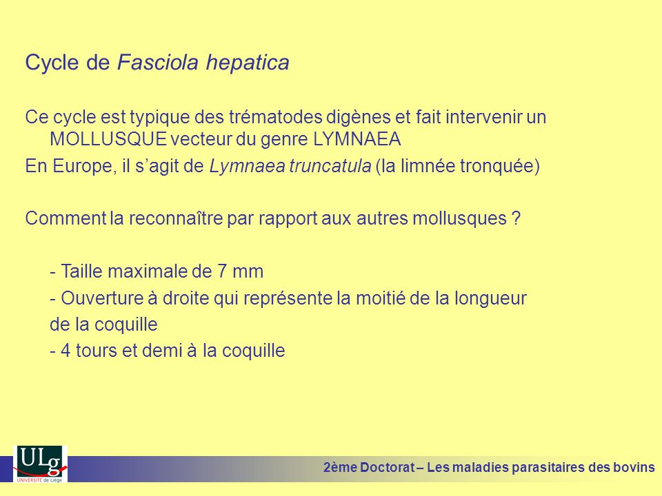 Cycle de Fasciola hepatica Ce cycle est typique des trématodes digènes et fait intervenir un MOLLUSQUE vecteur du genre LYMNAEA En Europe, il s'agit d