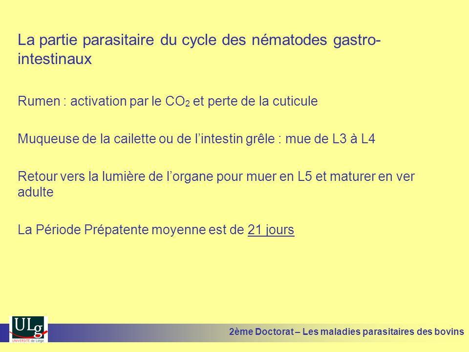 La partie parasitaire du cycle des nématodes gastro- intestinaux Rumen : activation par le CO 2 et perte de la cuticule Muqueuse de la cailette ou de