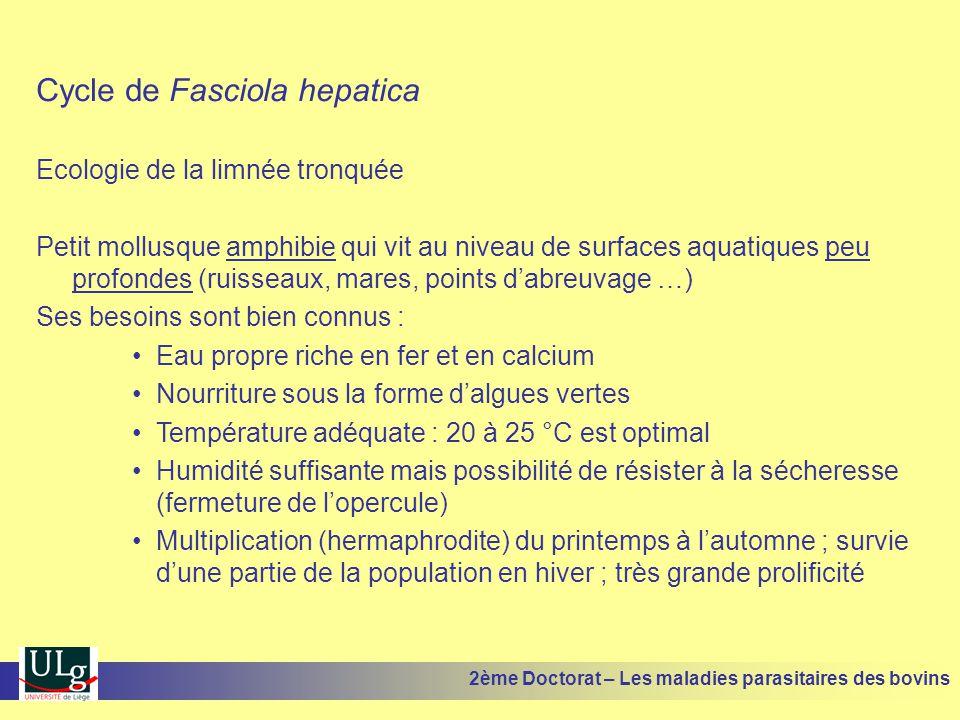 Cycle de Fasciola hepatica Ecologie de la limnée tronquée Petit mollusque amphibie qui vit au niveau de surfaces aquatiques peu profondes (ruisseaux,