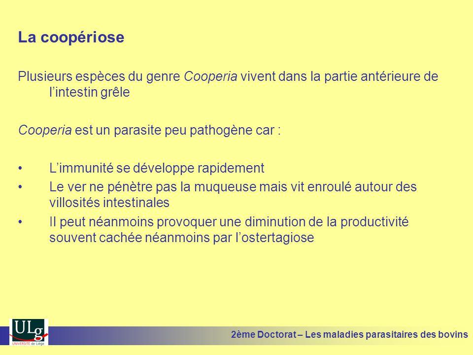La coopériose Plusieurs espèces du genre Cooperia vivent dans la partie antérieure de l'intestin grêle Cooperia est un parasite peu pathogène car : •L