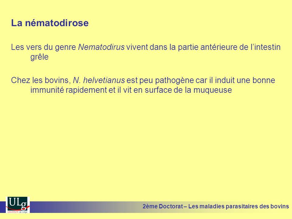 La nématodirose Les vers du genre Nematodirus vivent dans la partie antérieure de l'intestin grêle Chez les bovins, N. helvetianus est peu pathogène c
