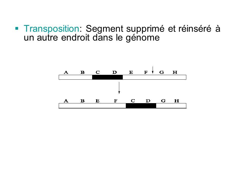  Transposition: Segment supprimé et réinséré à un autre endroit dans le génome