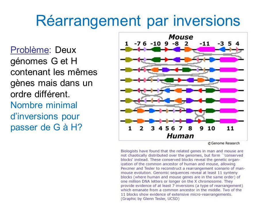Réarrangement par inversions Problème: Deux génomes G et H contenant les mêmes gènes mais dans un ordre différent. Nombre minimal d'inversions pour pa