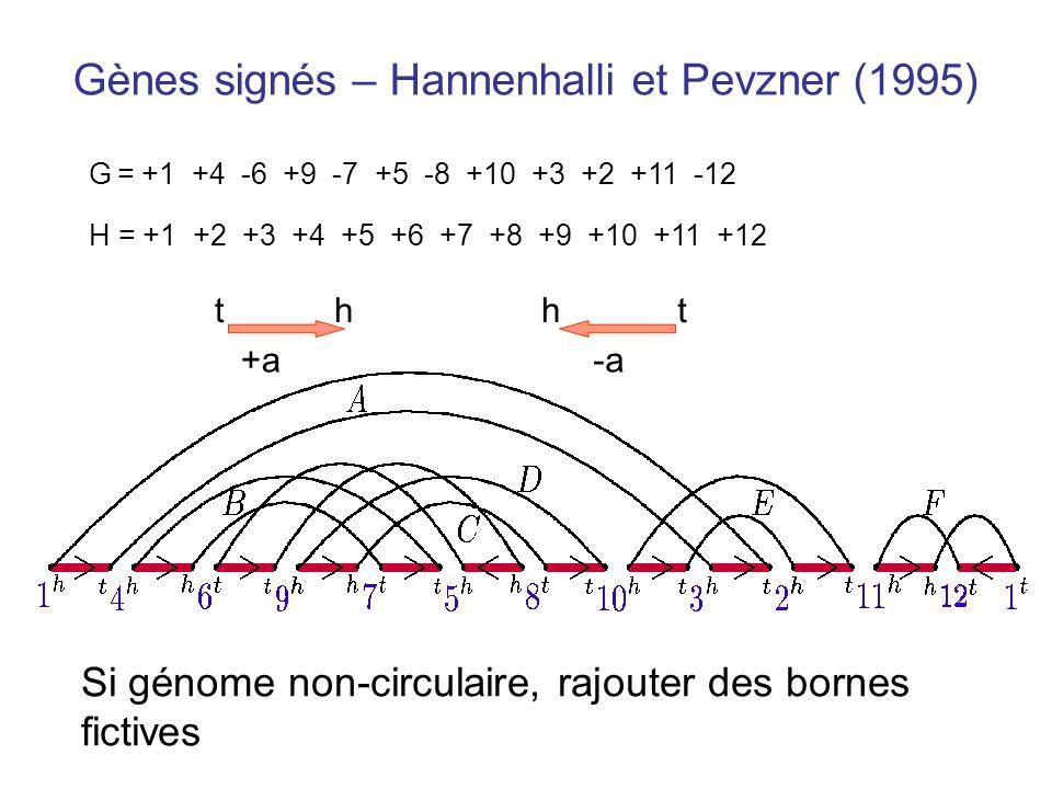 Gènes signés – Hannenhalli et Pevzner (1995) G = +1 +4 -6 +9 -7 +5 -8 +10 +3 +2 +11 -12 H = +1 +2 +3 +4 +5 +6 +7 +8 +9 +10 +11 +12 +a th -a ht Si géno
