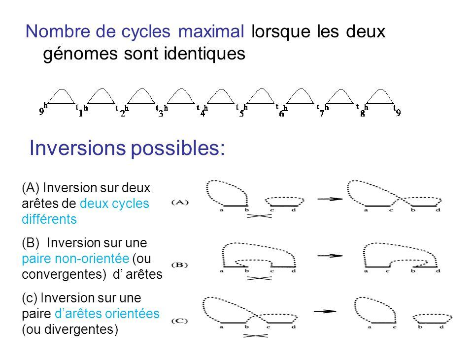Nombre de cycles maximal lorsque les deux génomes sont identiques Inversions possibles: (A) Inversion sur deux arêtes de deux cycles différents (B) In